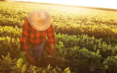 Cáritas La Rioja invita a los agricultores a utilizar su servicio de intermediación laboral para contratar temporeros